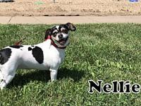 Nellie's story Nellie Female Terrier Mix Estimated 2