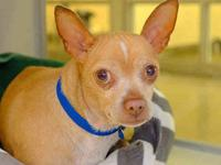 NELSON's story LOOKING FOR LOVE! Favorite Things: