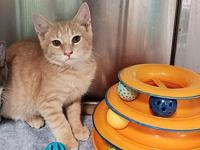 Nemo's story Nemo is a 4 month old male kitten. He and