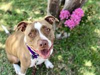 Nena's story Sweet Nena is ready to find her forever