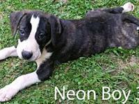 Neon Boy 3's story ADOPTION APPLICTAION: