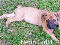 Neon Girl 3's story ADOPTION APPLICTAION: