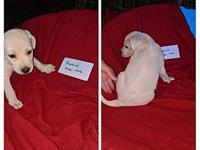 Neptune's story I am one of seven pups. Our mom is a