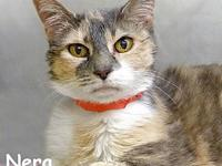 Nera's story Nera is a very sweet and sassy older gal