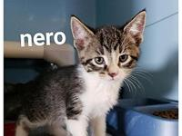 Nero's story Meet Nero! He was a released to HSofMM