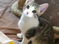 My story Hi, my name is Nero, I am 3 months old and