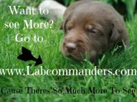 Are you searching for Labs? But Not only Labs But good,