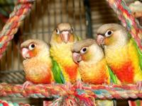 BIRD JUNGLE & REPTILES- new name but over 23 years in