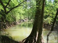 """The Pearl River Overlook Tract"" at 425+/- acres, is"
