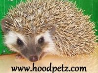 Hedgehogs available now. We are have 12 years