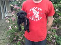 I have 1 beautiful black female puppy left looking for