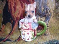 """NEW LITTER"" Registered Tiny T Cup Chihuahuas, Fawn"