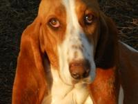 ****DJ's The best in Basset's**** Ready to go 2 Cowboys