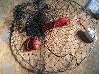 Brand new with tags, Pier fishing drop net, with rope