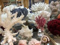 New Delivery of Sea Corals All kinds, costs, shades and
