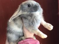 Variety of bunnies. Several available both genders.