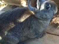 http://www.glasspondfarm.weebly.com Our rabbits are