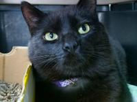 Newbie was surrendered to us after his beloved owner of