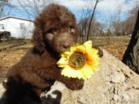 Hi there. We are proud Newfypoo breeders located in