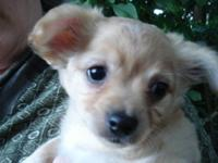 One chihuahua pup remains to be adopted! We've been