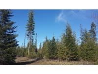 20 acres of forestland. Near to Newport, WA and Diamond