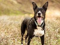 NEWT's story  NEWT, Male 12 years of age 53 lbs &