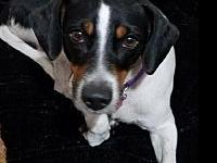 Nezi's story You can fill out an adoption application