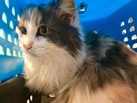 Nia's story Nia is a soft and fluffy young cat that is