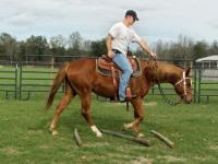 Niache is a 2000 QH mare available for adoption. She is