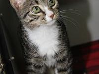 Nibbles's story Nibbles is a handsome male kitty who