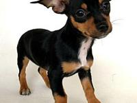 Nibbley - 410241's story Meet Nibbley! This sassy
