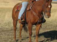 Stout AQHA 6 year old sorrel mare. This mare is built