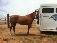 This gelding is a pleaser!!! He is 9yo and stand aprox