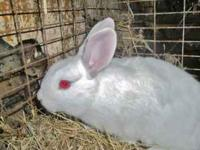 I have some nice bunnies for sale some big and some