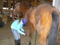cute little mare, can jump to two feet, good on trails,