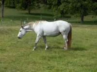 I have several NICE QUALITY gray AQHA broodmares that I