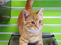 Nicholas's story Adoption fee is $  75.00, this