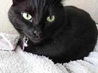 NICKI - Offered by Owner's story   Nicki is a