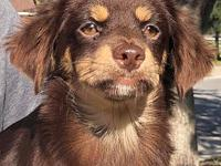 My story I am a female Dachshund mix. I am about 1 year