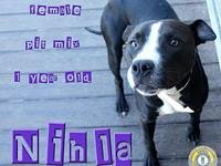 Nihla's story You can fill out an adoption application