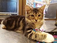 Nika's story I am a sweet loving kitten who scampers