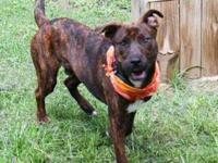 NIKE's story Handsome Nike is with a foster family! If