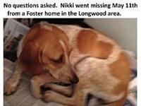 Nikki- MISSING's story You can fill out an adoption