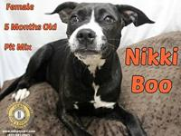Nikki Boo's story You can fill out an adoption