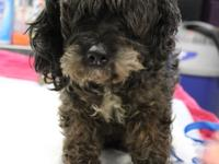Nikki is a Schnauzer and Poodle mix.  Makes her fur