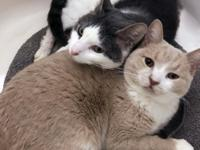 Affectionate, playful and active, Nina and Tommy are