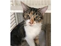 Nina's story Come meet this friendly beauty at the