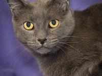 My story Nina is very sweet and laid back, rescued from
