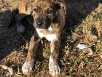 Nina is a young spayed female mix puppy. She has