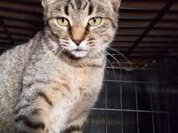 Nina is a 2 year old brown tabby who is learning what